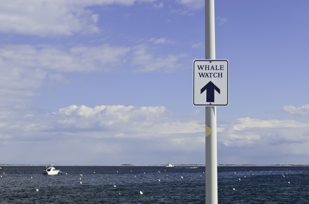Harbor sign pointing toward landing in Provincetown, Massachusetts, for whale-watching tours