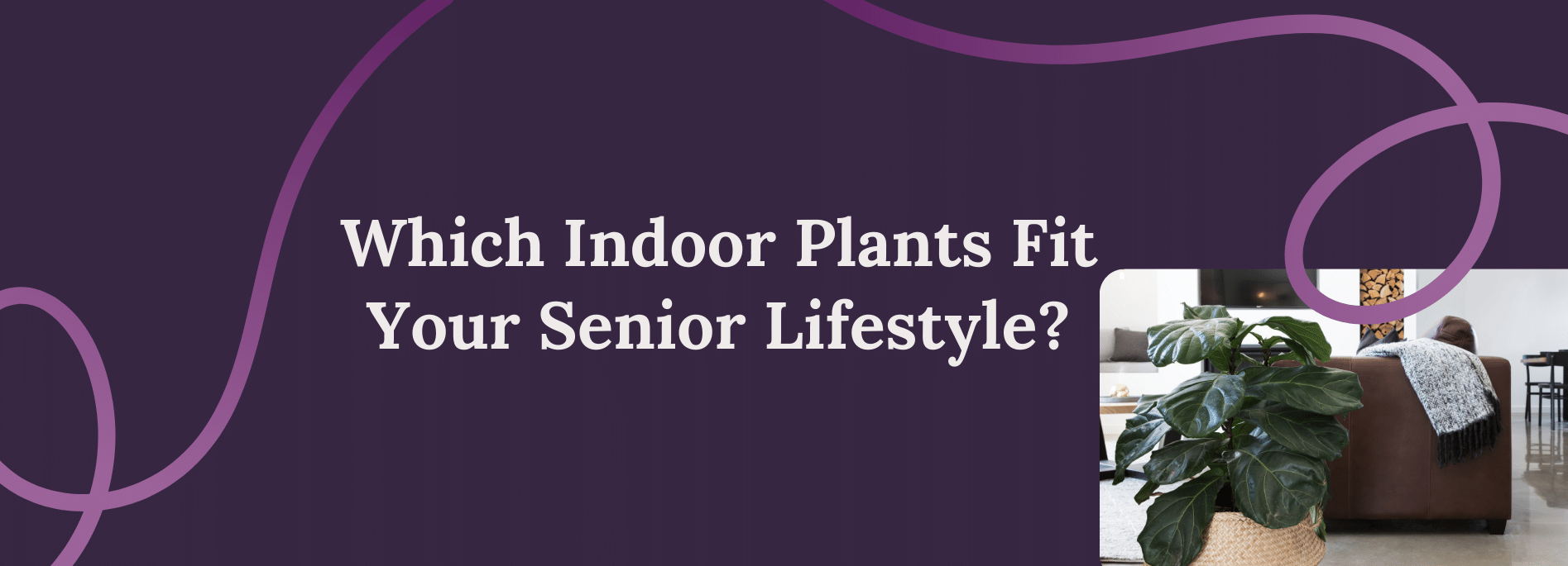 Which Indoor Plants Fit Your Senior Lifestyle?